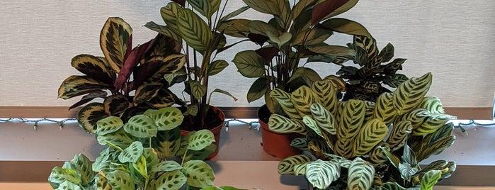 Mickey Hargitay Plants is one of LA3.