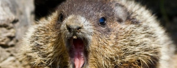 Groundhog Daypocalypse 2013 is one of The Horror... The Horror.
