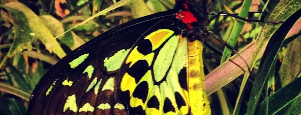 The Butterfly Conservatory at the American Museum of Natural History is one of More Manhattan.