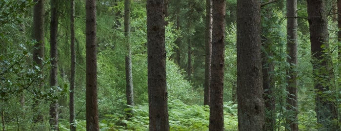 Devilla Forest is one of Where I've Been - Landmarks/Attractions 2.