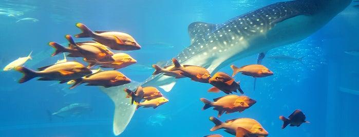 Osaka Aquarium Kaiyukan is one of Posti che sono piaciuti a Fernando.