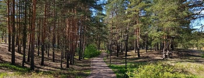Парк-терренкур is one of Сестрорецк и побережье Финского залива.