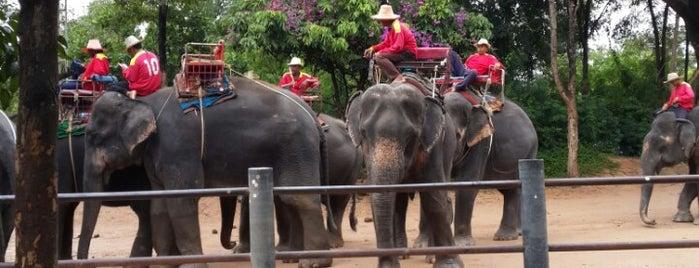 Siam Safari Elephant Trekking Thailand is one of (Temp) My Thailand.