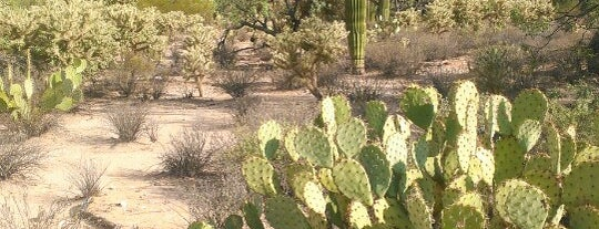 Sabino Canyon Recreation Area is one of Tucson.