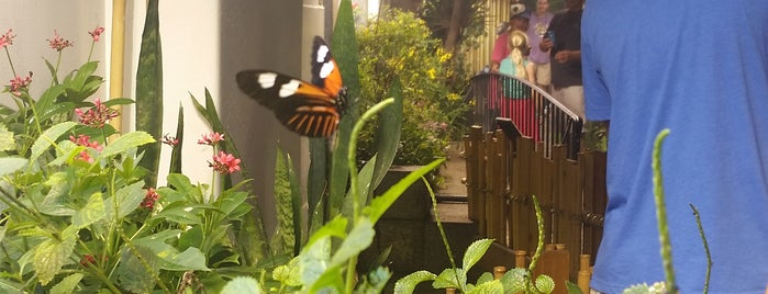 Audubon Insectarium is one of Lugares favoritos de Lovely.