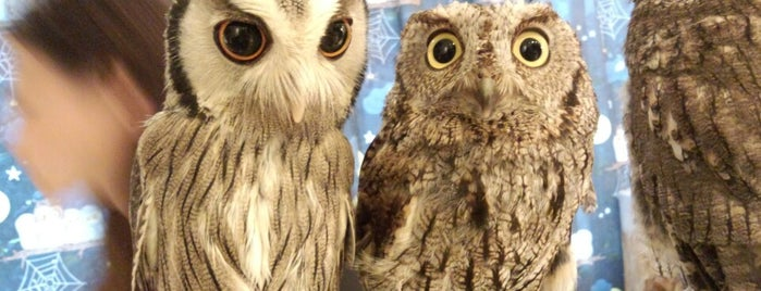 Owl Cafe is one of Tokyo To Do.