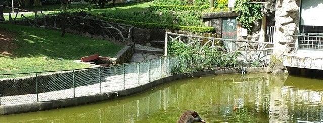 Jardim Arca d'Água is one of Porto.