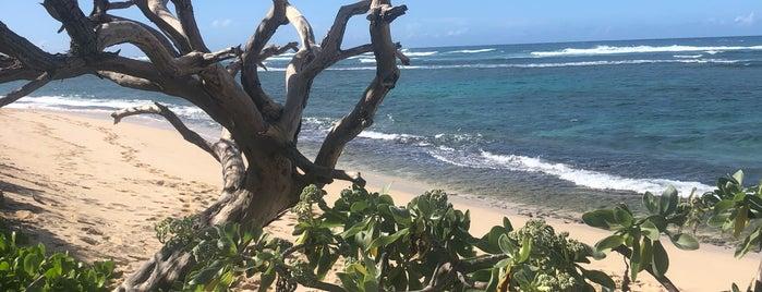 Mokulē'ia Beach Park is one of Oahu.