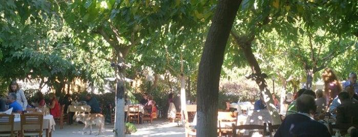 Μανάρας is one of Andreas : понравившиеся места.