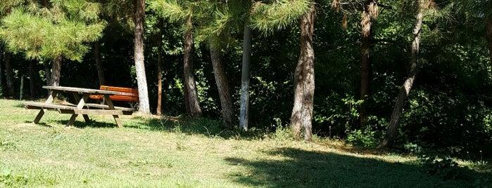 Yeni Uyum Çamlık Bahçe is one of Parklar.