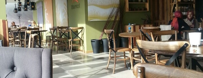 Harvest Cafe is one of Tempat yang Disukai Ilker.
