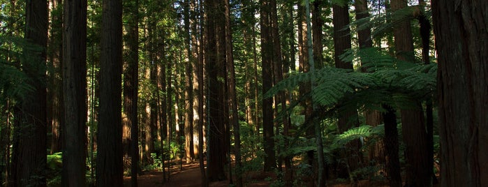 The Redwoods is one of New Zealand.