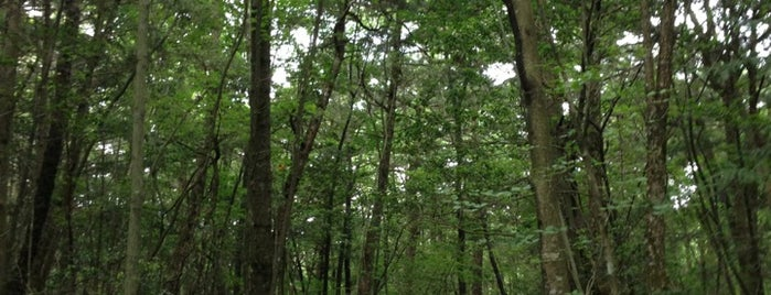 Aokigahara Forest is one of Japan/Other.