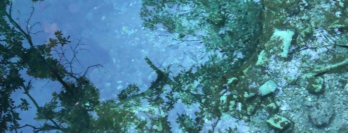 Cenote Escondido is one of Tulum.