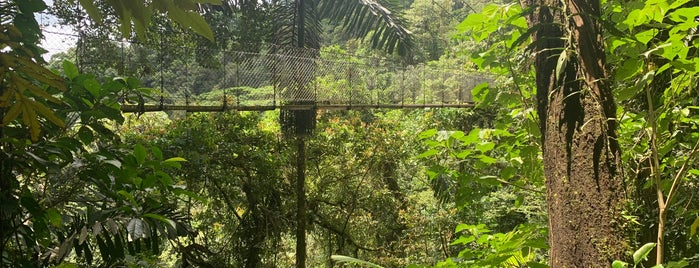 Mistico Arenal Hanging Bridges Park is one of Costa Rica.