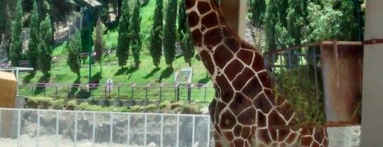 Zoológico Del Altiplano is one of สถานที่ที่ Cass ถูกใจ.