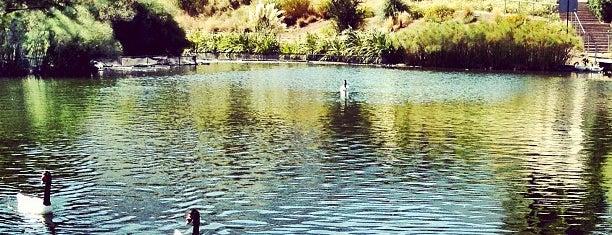 Laguna Parque Bicentenario is one of Santiago.
