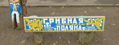 Парк деревянной скульптуры «Грибная поляна» is one of СтареENький Город.