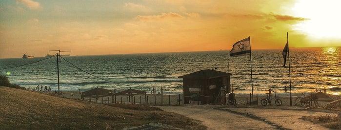Ashkelon Beach is one of Oleksandr : понравившиеся места.