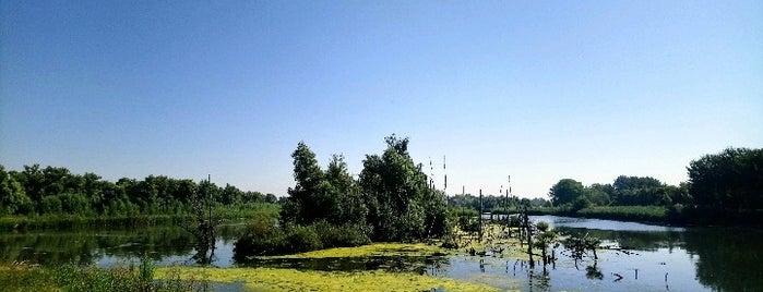 Nationaal Park De Biesbosch is one of Wandelen.