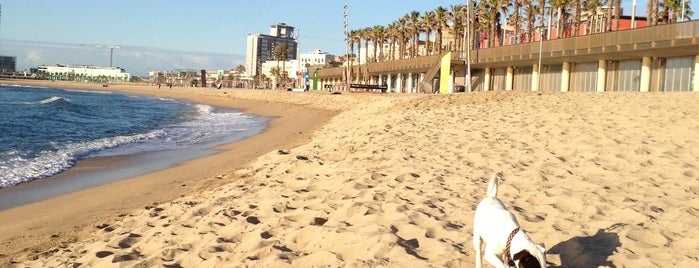 Platja de la Barceloneta is one of Go back to explore: Barcelona.