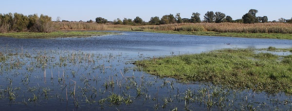 Green River State Wildlife Area is one of Illinois State Parks.