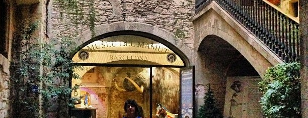 Museo del Mamut de Barcelona is one of I love Museum.