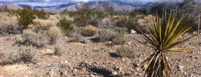 Floyd Lamb Park at Tule Springs is one of Las Vegas.