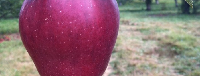 Stribling Orchard is one of Excellent Farms for Apple Picking.