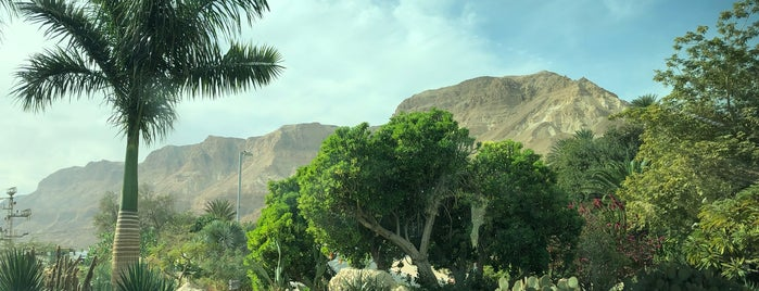 Ein Gedi Country Resort Hotel is one of Best places ever.