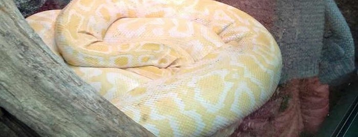 Animal World and Snake Farm is one of River run.