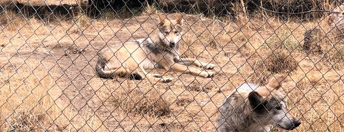 Wolf Haven International is one of Locais salvos de caitlin.