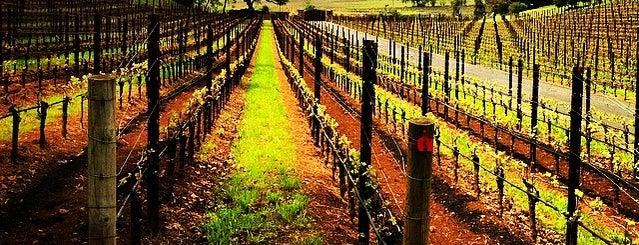 Dancing Hares Vineyard is one of NVFF | Wine Partners.