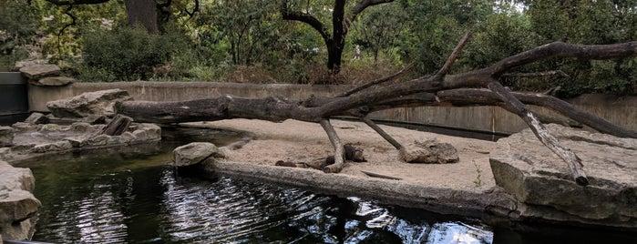 Zwergotter | Zoo Berlin is one of Tempat yang Disukai Sevil.