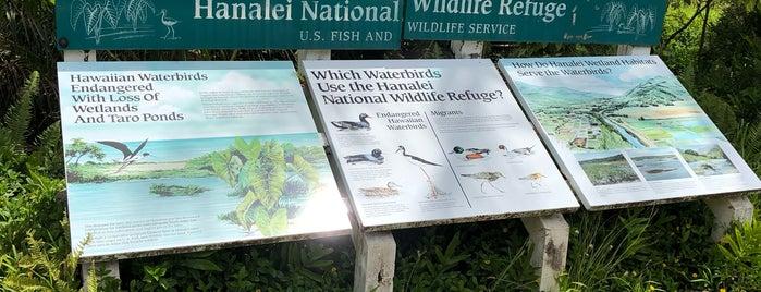 Hanalei Wildlife Refuge is one of 🚁 Hawaii 🗺.