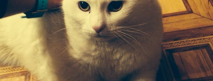 Ека Хауз Каменноостровский Проспект 64 is one of Favorite Cats.