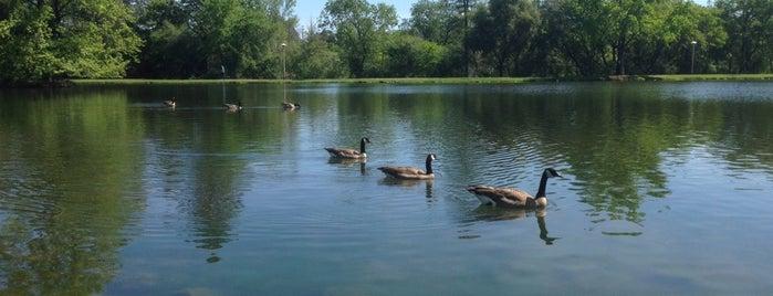 Regional Auburn Park is one of California.