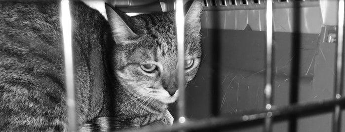 """Ветеринарна Клиника """"Добро Хрумване"""" is one of Orte, die Elena gefallen."""