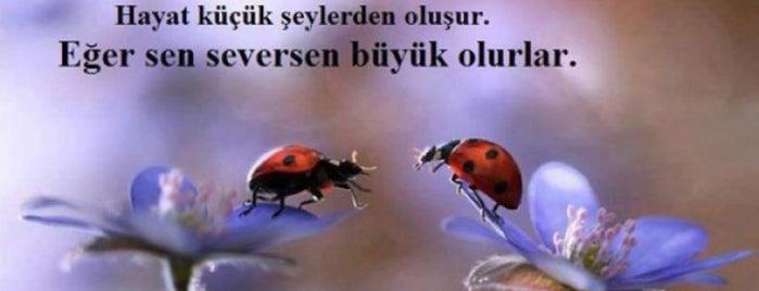 Aydem Hasanefendi MİM is one of ✨💫GöZde💫✨ : понравившиеся места.