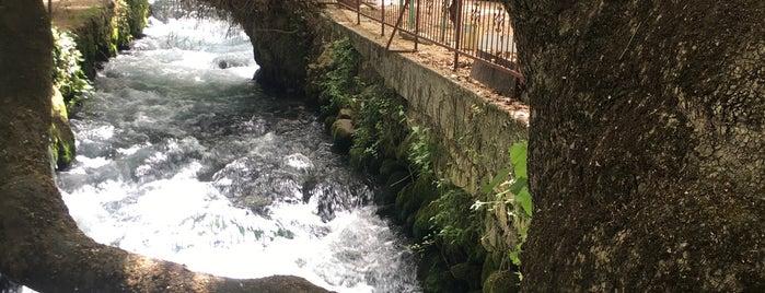 Zeyve Pazarı is one of Halil.