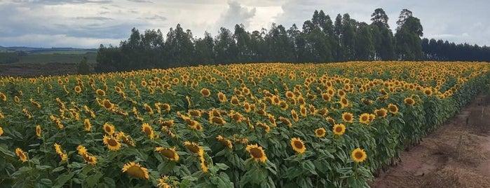 Sitio Pantanal Turismo Rural is one of Locais curtidos por Angelo.