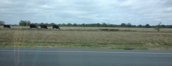 U.S. Route 75 near a cow is one of Good to know.