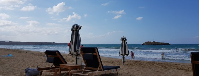 News Cafe Beach Bar is one of Lugares favoritos de kαpα.