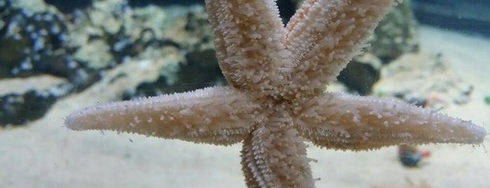 Sea Life London Aquarium is one of Lugares favoritos de Rinatsu.