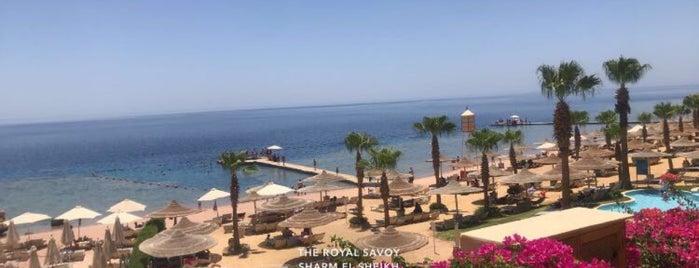 Royal Savoy Sharm El Sheikh is one of Orte, die Moe gefallen.