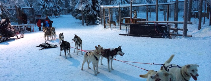 Arctic Circle Huskypark is one of Lugares favoritos de Julia.