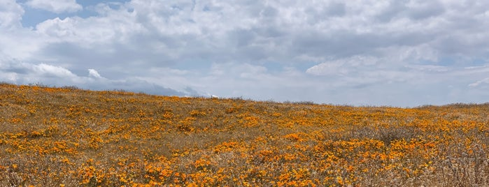Antelope Valley Poppy Reserve is one of Los Angeles Trip.