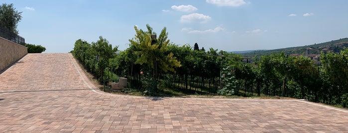 Fratelli Vogadori - Amarone Valpolicella Family Winery is one of Tiziana'nın Kaydettiği Mekanlar.