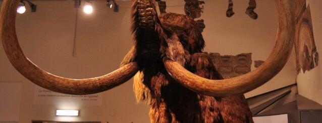 """Museo Civico di Scienze Naturali """"E. Caffi"""" is one of MUSEI2011."""