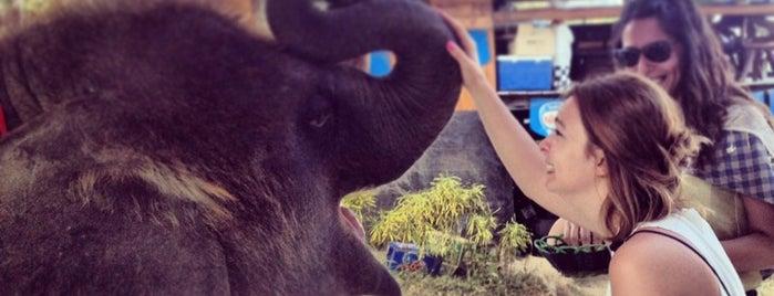 Siam Elephant Safari is one of Thailand.